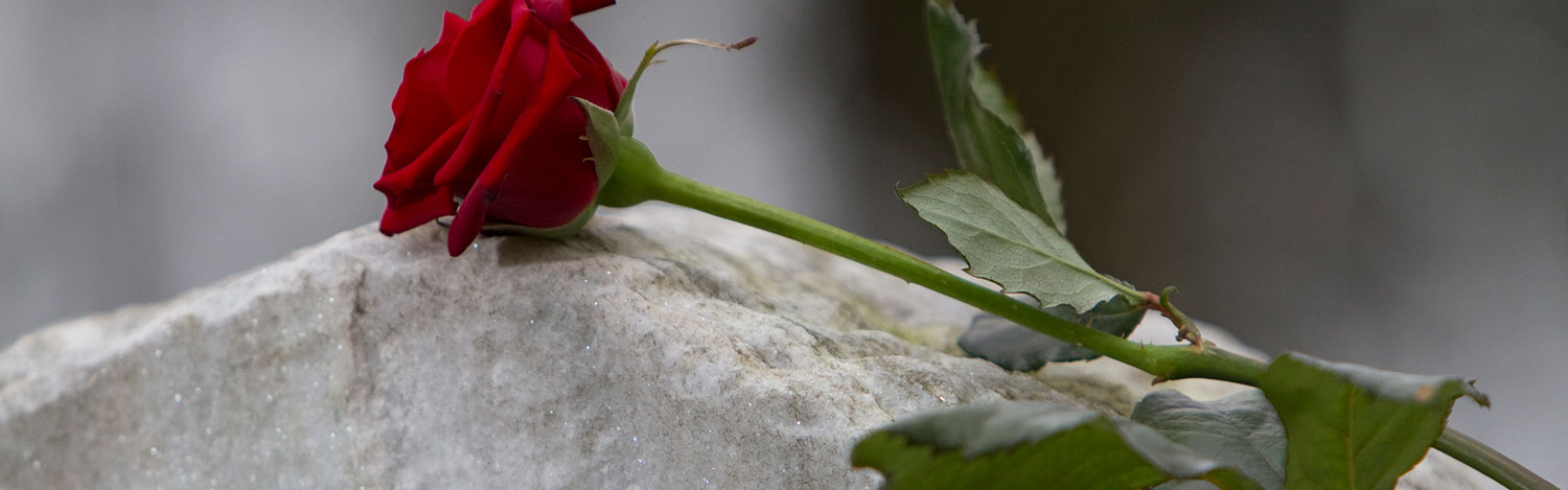 View of rose on gravestone