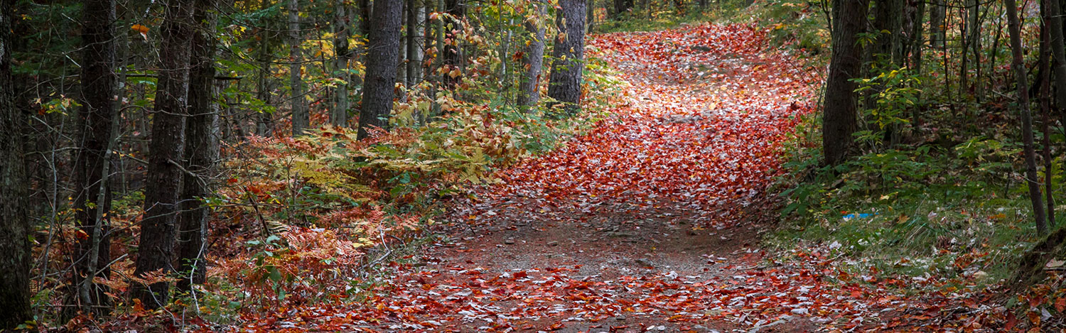 Photo of a trail covered in leaves